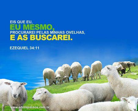 ovelha perdida, bom pastor